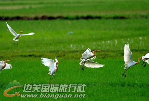 万鹤山滨海湿地公园,东兴万鹤山滨海湿地公园