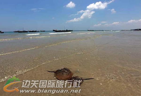[防城港景区] 景区地址:防城港江山半岛的东南部 /起 白浪滩景色秀丽