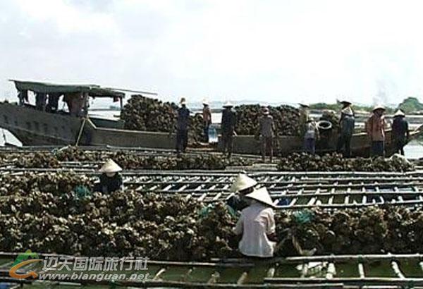 防城港企沙龙海湾渔家城邓强蚝排