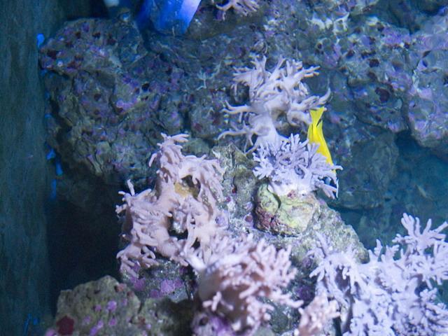 北海海洋之窗坐落于我国富饶美丽的北部湾之滨,位于北海市四川南路中段,占地2.1公顷,建筑面积18100平方米。由神秘绚丽的活体珊瑚、丰蕴深厚的航海历史文化、高科技造景技术的新一代无水水族馆、创多项国内之最的巨型圆缸景观,及逼真刺激的国际最先进的4D动感电影等构成。是一座引领海洋科技时尚、传播海洋文化品位、领略海洋无限风光的大型综合性海洋博览馆。  景区共分神秘的大海、远古海洋、时光隧道、珊瑚海、海之角、梦幻海洋、海洋资源厅、海上丝绸之路、郑和下西洋、地理大发现、海洋剧场、滨海景观、红树林生态区、贝类文化
