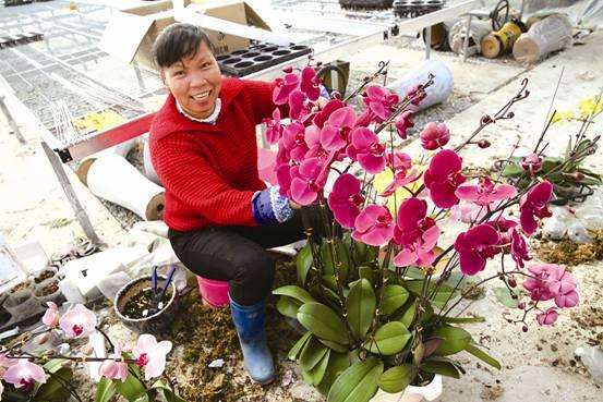 美丽创建结合特色农业发展,绽开美丽花朵