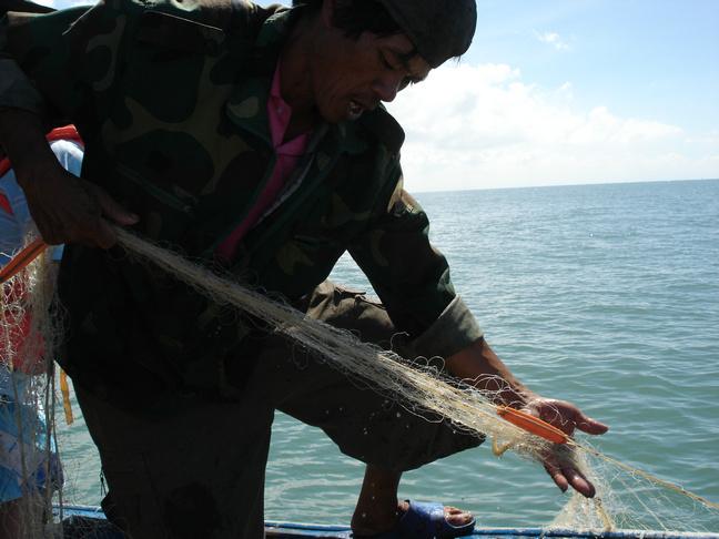 海豚这种特殊功能已被生命科学部门和军事部门进行仿生学研究.
