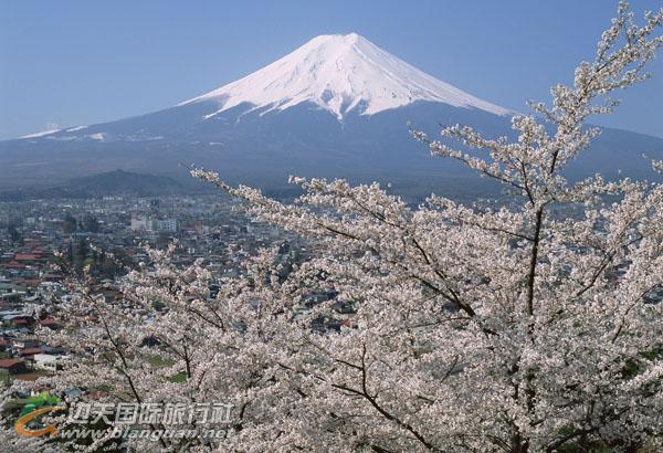 日本本州河津初见早樱物语6天游