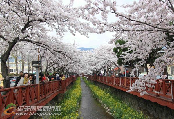 韩国首尔济州赏樱花6日游