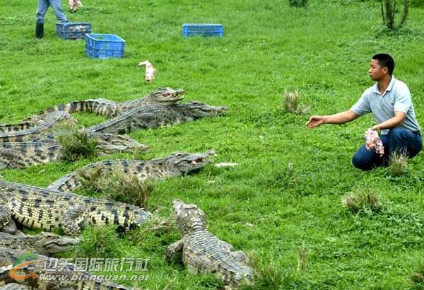 2016春节广州长隆鳄鱼公园+野生动物园二日游